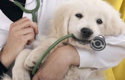 Activitati veterinare