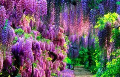 Flori si plante